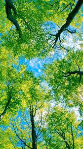 looking up at green trees android wallpaper free