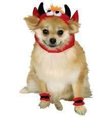 Sheep Dog Costume Halloween Ten Halloween Costumes 2012 Dogtime