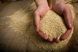 cuisiner le quinoa le quinoa et sa nutrition comment le manger en toute saison
