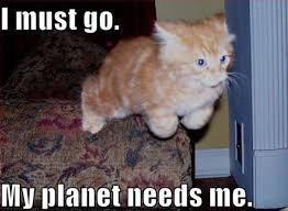 Kittens Memes - kitten stuff students need to know