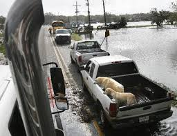 Truck Bed Dog Kennel Louisiana Legislature Approves Ban Of Dogs Riding In Back Of