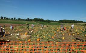 Kensington Pala by Stehly Farms Celebrates Pumpkin Patch Day Valley Roadrunner