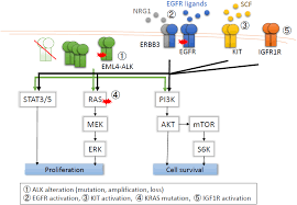 cancers free full text mechanisms of acquired resistance to