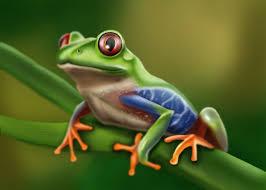 artstation eyed tree frog matt fossen