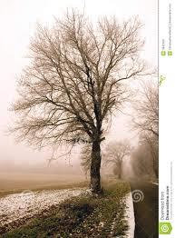 vintage tree royalty free stock photos image 3942458