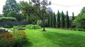 taylor juniper bushes backyard evergreen hedge