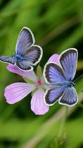 463 best butterfly photography images on pinterest beautiful