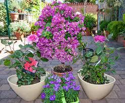 winterharte pflanzen balkon blühendes für balkon und terrasse