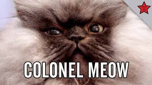 Colonel Meow Memes - colonel meow s diaries a rise to power youtube
