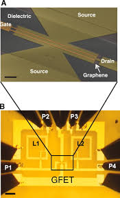 wafer scale graphene integrated circuit science