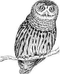 clipart owl black and white clipart of an owl