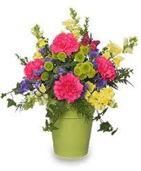Flowers Information - carnation flower information carnation cut flower flower shop