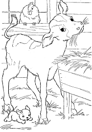 feeds the calf farm animal coloring pages xppy jpg 1026 1460