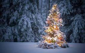 christmas tree forest christmas ideas