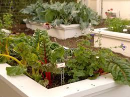 raised bed gardening hgtv