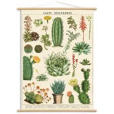 cactus succulents vintage style poster with hanger kit diy