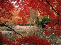 free autumn wallpapers desktop wallpapers browse