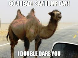 Hump Day Meme - top 10 funny hump day jokes and hump day funny images jokes hump day