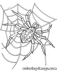 spider web free coloring pages for kids