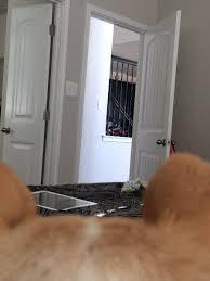 funny door stops cam protector on twitter