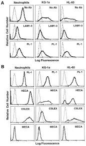 l selectin ligands expressed by human leukocytes are heca 452