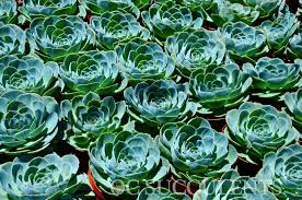 cheap california for sale wholesale succulent nursery orange county los angeles san diego