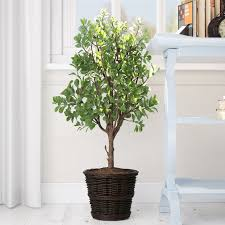artificial potted ficus tree in basket reviews birch