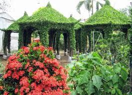 cho lach ornamental flower