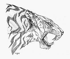 drawn white tiger roar pencil and in color drawn white tiger roar