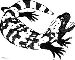 desert lizard coloring page gila monster coloring page 450991