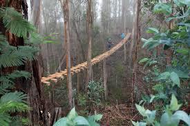 rainbow eucalyptus tree see rainbow trees on maui tour