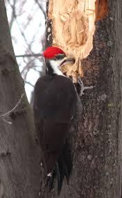 21 best our backyard birds images on pinterest backyard birds