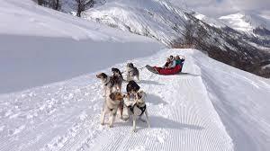husky sledding in val thorens valthonet com