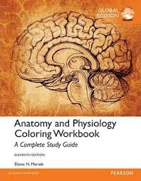 Human Anatomy And Physiology By Elaine N Marieb Anatomy And Physiology Coloring Workbook A Complete Study Guide
