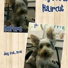 shooch mobile pet grooming 14 photos pet groomers