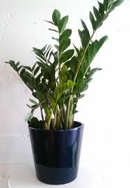 house plants no light what houseplants need light u2013 fresh design pedia