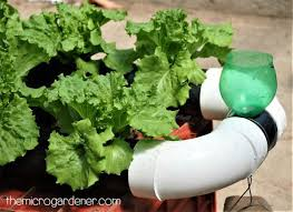 is pvc plastic safe to use in an organic garden the micro gardener