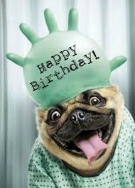 Pug Birthday Meme - happy birthday birthdays pinterest happy birthday birthdays