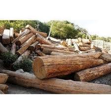 timber wood log timber wood log shree rajaguru timber
