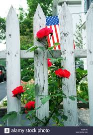 Red Flag White Flower White Picket Fence Red Roses And American Flag On July 4th In