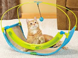 the best toys for playful cats and dogs pictures decorating
