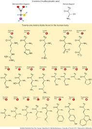 1 Letter Amino Acid Quiz