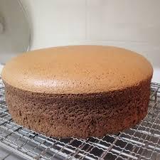 chocolate sponge cake chocolate cake and sponge cake