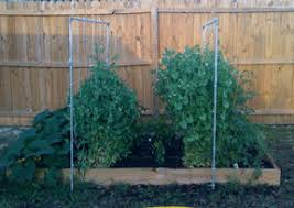 easy pea trellis growing vertical u2013how to support your plants u2013 my square foot garden