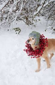 cranberry wreathes dog christmas cards ideas for anyone who u0027s