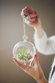 how to care for air plants u2013 a beautiful mess