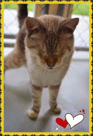 Blind Cat Sanctuary 100 Cat Pods Best 25 Cat Home Ideas On Pinterest Cat Stuff