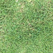 Landscaping Round Rock by Real Green Pest Control And Lawn Care 31 Photos U0026 60 Reviews