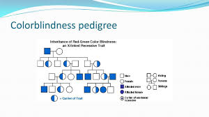 Color Blindness Pedigree Worksheet By Maddy Jones Coby Austin Ellie Stiller And Deon Robinson