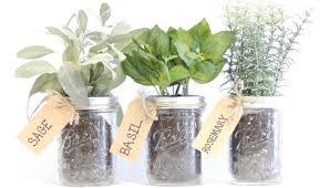 10 important tips to create your own indoor herb garden